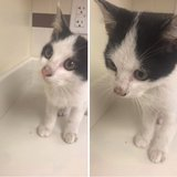 kitten found, needs a home ASAP in Okinawa, Japan