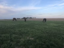 Horse boarding available in DeKalb, Illinois