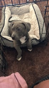 Puppy for sale + cage in Fort Irwin, California