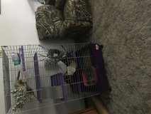 3 ferrets and cage in DeKalb, Illinois