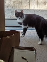 Rehoming kittens & Momma in Camp Lejeune, North Carolina