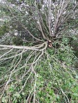Need Someon To Cut Up a Branch That Fell in Fort Campbell, Kentucky