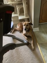 6 year old mix in Fort Campbell, Kentucky