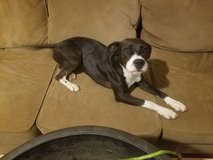 Free Dog to good home in Fort Knox, Kentucky