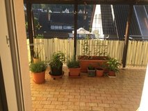 plants with pots in Ramstein, Germany