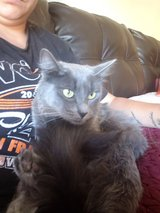 2 year old cat in Travis AFB, California