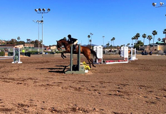 Horse For Sale in Camp Pendleton, California
