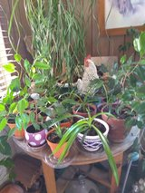 House plants in Yucca Valley, California