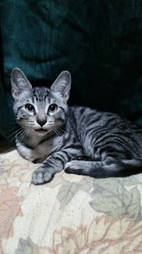 Kitten and Cats need good homes in Okinawa, Japan