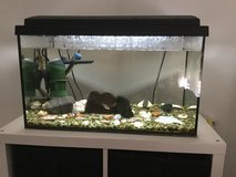 30 gallon tank with a few fish in Ramstein, Germany