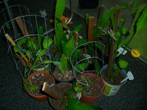 Plants for sale in Camp Lejeune, North Carolina