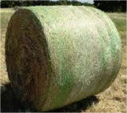Hay 4x5 net wrapped in Bellaire, Texas