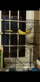 Chinchillas with cage in Cary, North Carolina