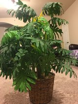 ARTIFICIAL PLANT - BASKET INCLUDED in Kingwood, Texas