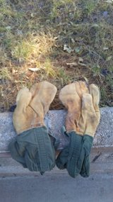 Camo Mitten Shells in Alamogordo, New Mexico