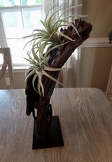 NEW PotteryBarn Air Plants on Stand in Camp Lejeune, North Carolina