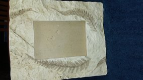 Fossil-like Picture Frame in Houston, Texas