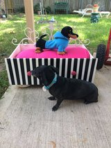 DOG or PET Bed in Kingwood, Texas