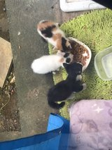 kitties and cats free to loving home in Okinawa, Japan