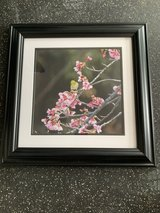 Okinawa Cherry Blossom&Bird framed photo print in Okinawa, Japan