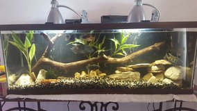 50 Gallon aquarium with rocks in Aurora, Illinois