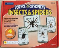 Lakeshore Science Specimens Insects & Spiders in Okinawa, Japan