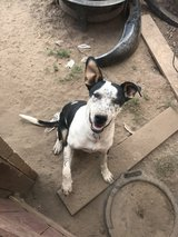 Looking to Rehome Pablo in Alamogordo, New Mexico