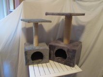grey or silver/grey cat trees in Ramstein, Germany