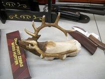 elk knife display stand in Moody AFB, Georgia