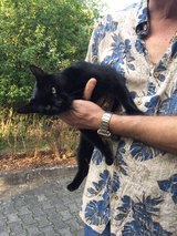 I found a cat now 2 days and he is still in that area in Ramstein, Germany