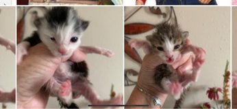 kittens FREE in Houston, Texas