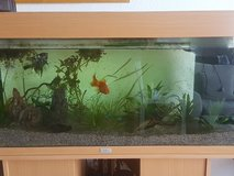 fish tank 148 liter juwel with stand filter fish and lights in Grafenwoehr, GE