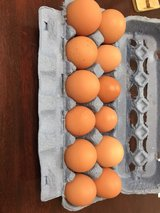 Fresh brown eggs in Beaufort, South Carolina