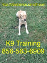 Affordable dog and puppy training in Fort Drum, New York