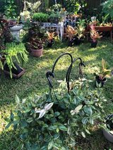 FALL PLANT SALE TODAY!!!! in Kingwood, Texas