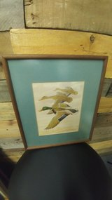 Framed Mallard Duck Print in Beaufort, South Carolina