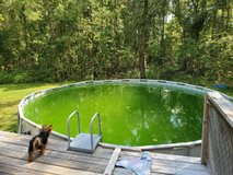 Looking for someone to  clean my above ground pool in Camp Lejeune, North Carolina