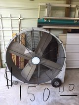 Shop Fan in Camp Lejeune, North Carolina