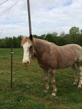 Need A Home for Us in Fort Campbell, Kentucky