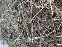 Mixed grass hay (square bales) in Fort Leonard Wood, Missouri