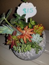 Succulent arrangements at low prices in Camp Pendleton, California