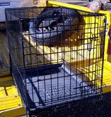 DOG KENNEL Small / Med Size w/Tray Strong Metal Crate in Alamogordo, New Mexico
