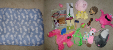 HUGE Puppy lot bed, toys, grooming, teething, harness ect... in Camp Lejeune, North Carolina