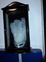 Small Display Case with Mask in Ramstein, Germany