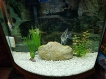 40 gallon freshwater tank w fish in Joliet, Illinois