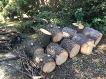 Pine Logs, Firewood, and Boughs in Westmont, Illinois