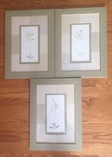 3 Framed Botanical Pictures in St. Charles, Illinois