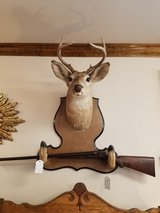 8pt Deer mount with hoof Rifle rack in Fort Leonard Wood, Missouri