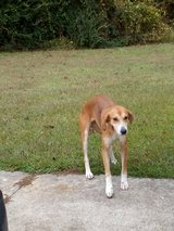 Dog found on watering pond road Pink Hill in Camp Lejeune, North Carolina