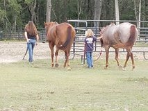 Horse boarding in Cherry Point, North Carolina